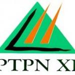 PTPN XI