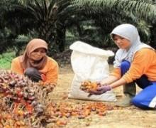 Lowongan PT Industri Nabati Lestari (PTPN 3 Group)
