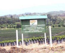 Lowongan PT Sinergi Perkebunan Nusantara Sulawesi Tengah